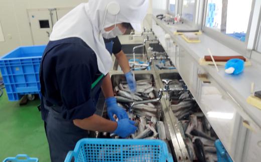 捌いた魚を綺麗に洗います
