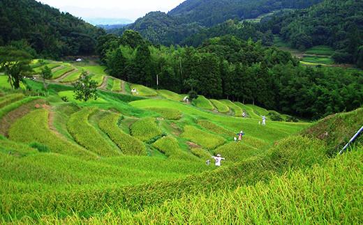 静かな里山の中鳥のさえずりが響く大山千枚田は日本の原風景とも言えます。