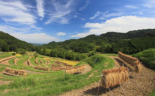 棚田の美しい景色が広がる鴨川市長狭地域の大山地区で生産されたお米です。