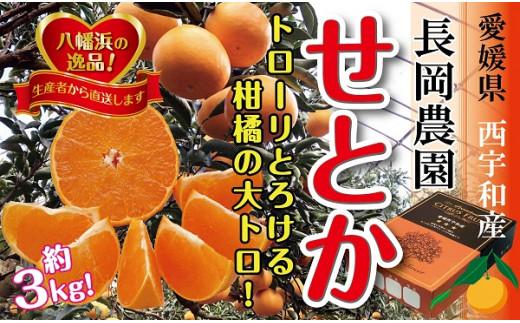C39-6.長岡農園の「せとか」約3キロ