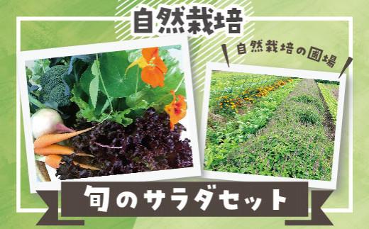 25.自然栽培 旬のサラダセット