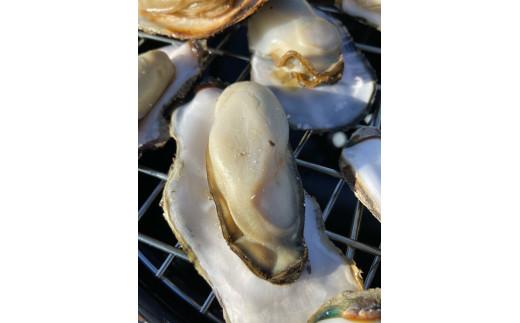 瀬戸内海で育った笠岡産殻付き牡蠣10kg(加熱用:Sサイズ)