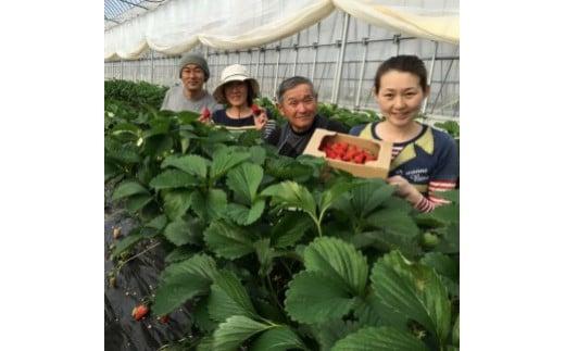 小松市「本田農園」さんの愛情たっぷり苺を使用しています。