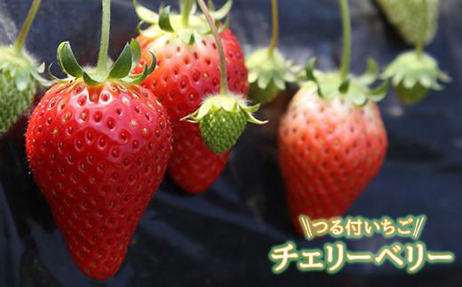 [№5666-0249]栃木県益子産つる付いちごチェリーベリー(とちおとめ)