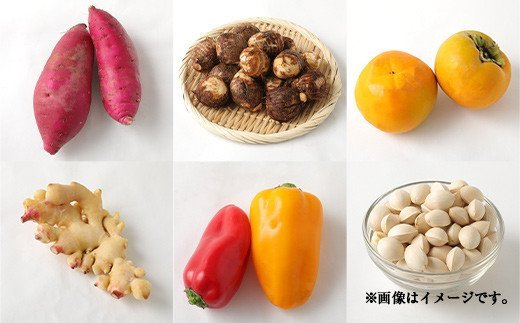 【定期便12回】豊野の恵み 野菜 果物 10品目程度 米 詰め合わせ
