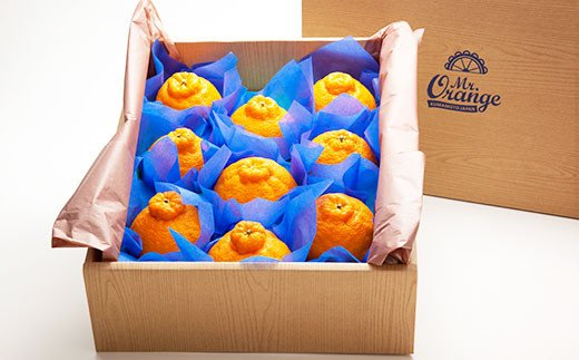 良品 不知火 10kg 環境マイスター 果物 柑橘 熊本県 水俣市産