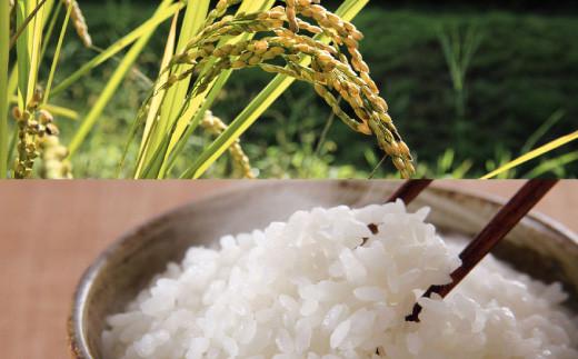 【令和2年産米】森のくまさん 10kg オリジナルパッケージ お米