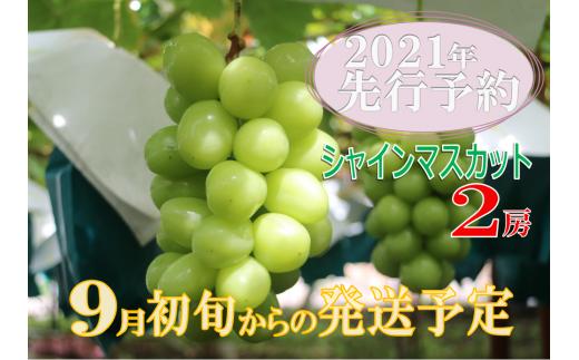 B2-140.【2021年先行予約】厳選!尚耕園プレミアムシャインマスカット2房1.2キロ