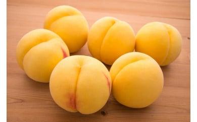 【2021年度産先行受付】甘みと酸味の絶妙なバランス 「黄桃(有袋・無袋)3kg」