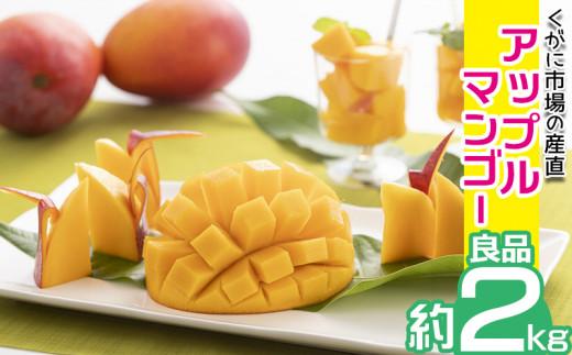 【2021年発送】くがに市場の産直アップルマンゴー約2kg【良品】