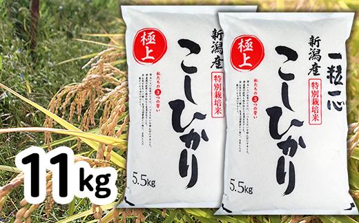 【令和2年産】新潟県長岡産特別栽培米コシヒカリ11kg