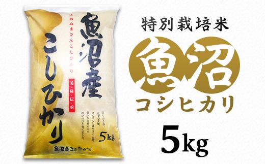 【令和2年産】新潟県魚沼産コシヒカリ(長岡川口地域)5kg