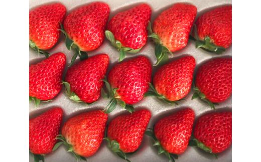【多々良フレッシュファーム】1,200g!大人気4種のいちご食べ比べセット