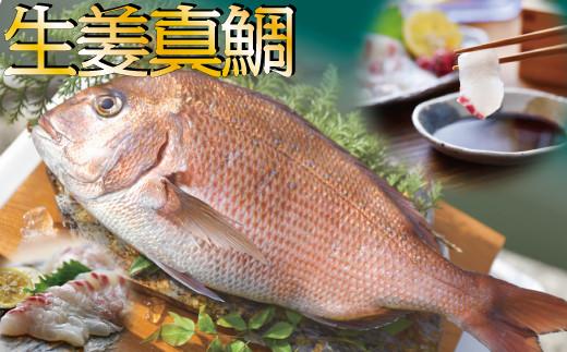 高知産の生姜を食べて育った、新鮮絶品の「生姜真鯛」二尾(鮮魚)