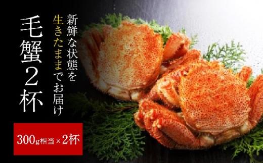 2021年2月より発送 ◆三陸産 活毛ガニセット (300g相当×2杯) 魚よし