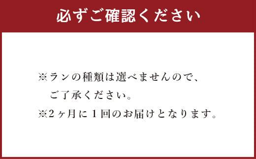 【定期便6回】ミディ胡蝶蘭の定期便(2ヶ月に1回)洋蘭 観賞用 贈答用