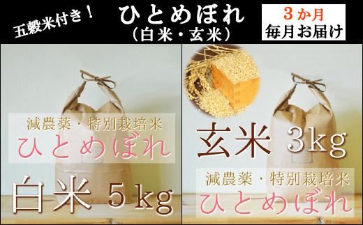 ひとめぼれの白米・玄米と五穀米つきを3カ月連続・月1回配送いたします!