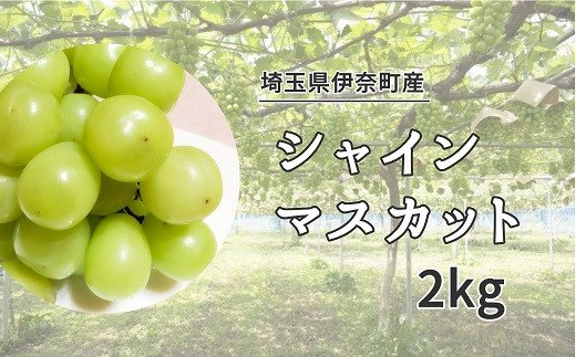 Y-1 埼玉県伊奈町産シャインマスカット2kg【山岸農園】