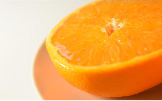 柑橘の最高峰 せとか 3kg(ハウス栽培)