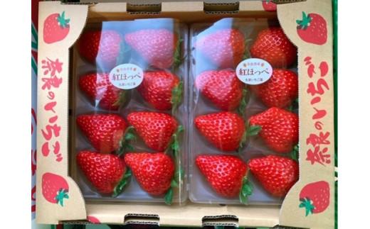 (冷蔵)《2月出荷分》早朝収穫当日出荷 完熟いちご300グラム×2P(2~3品種)