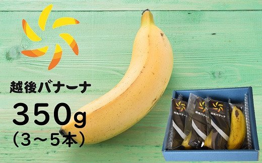 [B325]皮ごと食べられるバナナ!越後バナーナ 350g(3~5本)