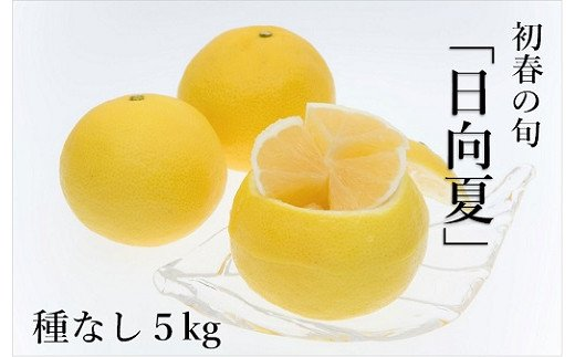 14-23_初春の旬「日向夏」種なし5kg