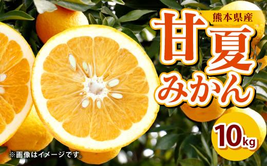 【事前受付】熊本県産 甘夏みかん 10㎏ 果物 柑橘 甘夏 あまなつ