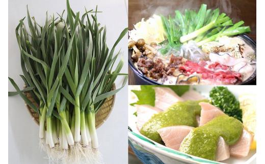 葉ニンニクはニンニクの1品種を若採りした野菜で柔らかく甘みがあり上品な香りが特徴。高知では鍋やすき焼き、ヌタ和えに欠かせません