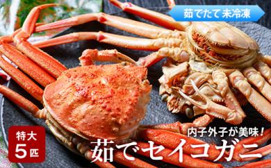 内子外子が美味! 茹でセイコガニ(セコ蟹、香箱ガニ、コッペ)特大サイズ 5匹セット