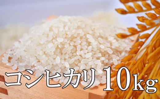 No.0991 2020年度米 この美味しさをひとりじめ『コシヒカリ』10kg