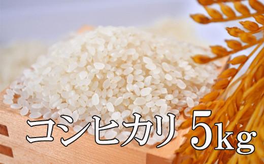 No.0990 2020年度米 この美味しさをひとりじめ『コシヒカリ』5kg