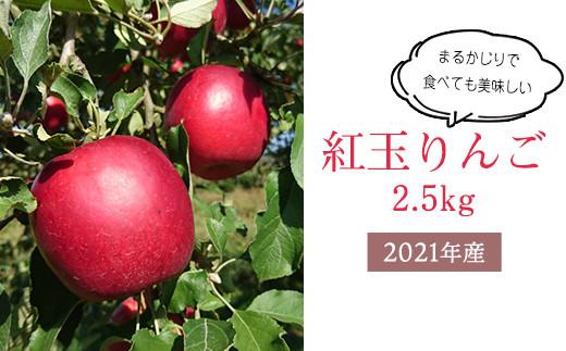 【先行受付/数量限定】紅玉りんご R3年産 2.5kg 10月中旬頃からお届け 2021年産