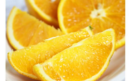 【国産】希少バレンシアオレンジ 5kg
