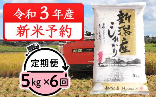 31-056【6ヶ月連続お届け】新潟県産コシヒカリ5kg