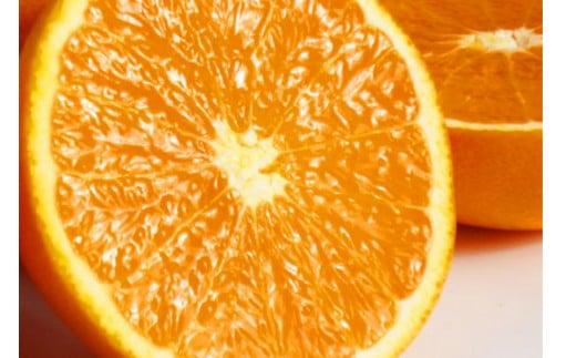 【予約】【ジューシー】清見オレンジ 5kg※2022年3月下旬頃から順次発送予定(お届け日指定不可)