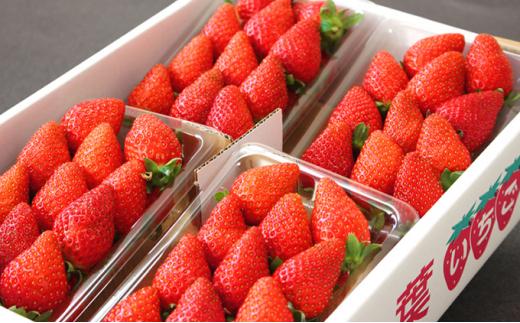 完熟いちご食べ比べセット1箱 不揃い(280g前後×4パック)2品種食べ比べ福袋[№5651-1009]