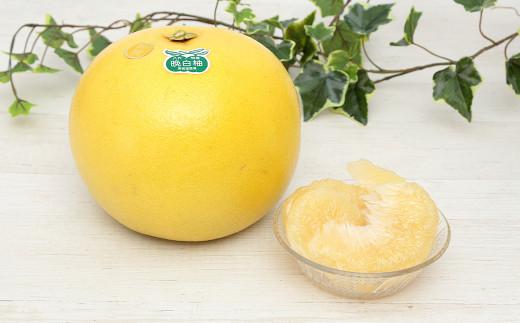八代市 晩白柚 2Lサイズ(1玉約 2kg) × 2玉入り 柑橘 ばんぺいゆ