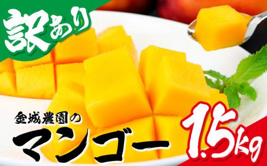 【訳あり】2021年発送 金城農園のマンゴー 1.5kg