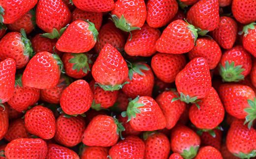 【品種】「さがほのか」・さがほのかの品種特性/淡い赤味・優しい甘みとやわらかな酸味。※この商品は予約販売となっております。