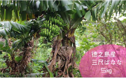 【鹿児島県天城町】徳之島産三尺バナナ 10kg