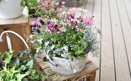 季節の寄せ植え<風の丘ガーデン> SKG01