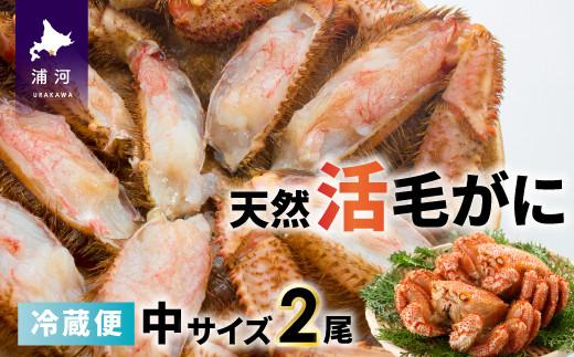 「活」の状態でお届けしますので、茹でて食べるのはもちろん、お刺身や鍋の具材としてもおすすめです!※画像はイメージです※