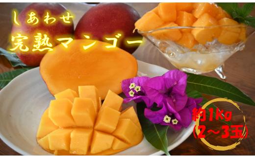 【先行予約開始】しあわせ完熟マンゴー 約1kg/2~3玉入り (マンゴーの森)