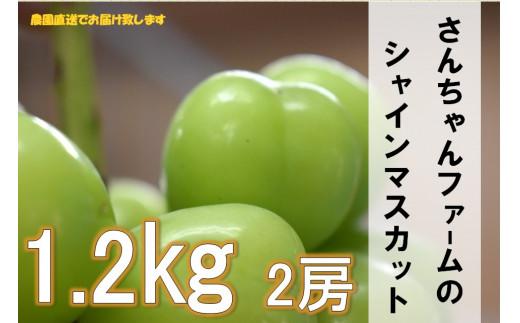 B-152.【2021年先行予約】さんちゃんファームのシャインマスカット2房入り1.2kg