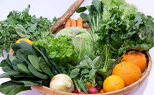 C-018.旬の野菜と果物セット