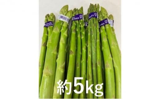 [№5850-0695]【大容量】不揃い グリーン アスパラガス 約5kg