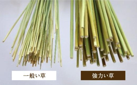 酒井農産 強力い草ラグ【杉山】3帖 幅190cm×長300cm い草