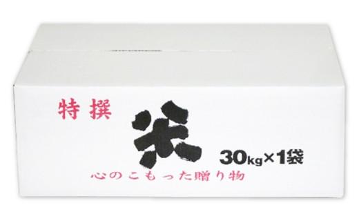 令和2年産 八代市産 玄米(ピカマル)30kg