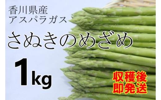 2021 香川県産アスパラガス「さぬきのめざめ」 1kg 先行予約受付