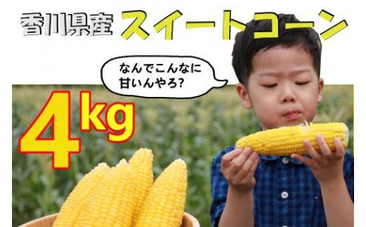 2021 香川県産スイートコーン 4kg 先行予約受付